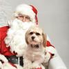 Fetch Santa13-8014