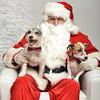 Fetch Santa13-8026