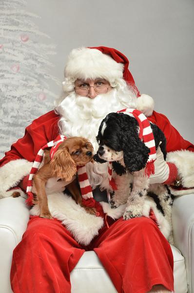 Fetch Santa13-8084