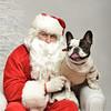 Fetch Santa13-8071