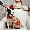 Fetch Santa13-8261