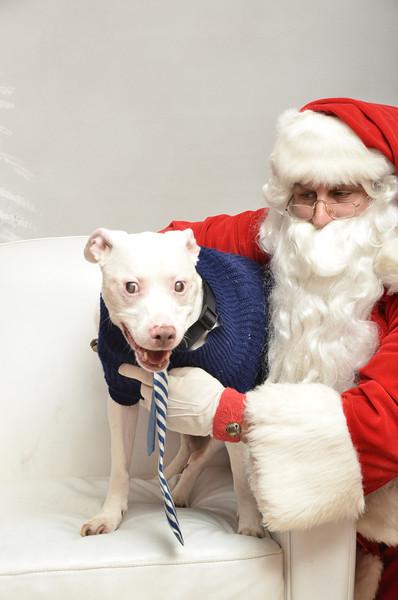 Fetch Santa13-8132