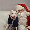 Fetch Santa13-8128