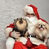 Fetch Santa13-7993