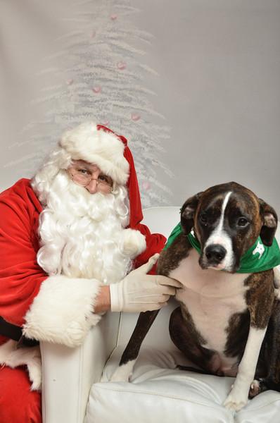 Fetch Santa13-8289