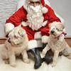 Fetch Santa13-7974