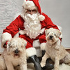 Fetch Santa13-7975
