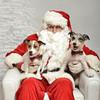 Fetch Santa13-8050