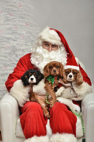 Fetch Santa13-8227