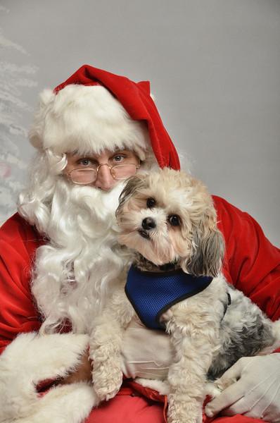 Fetch Santa13-7969