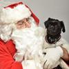 Fetch Santa13-8274