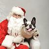 Fetch Santa13-8069