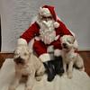Fetch Santa13-7981