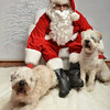 Fetch Santa13-7982