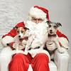 Fetch Santa13-8048