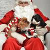Fetch Santa13-8092