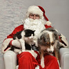 Fetch Santa13-8062