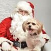 Fetch Santa13-8022