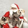 Fetch Santa13-8183