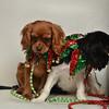 Fetch Santa13-8257