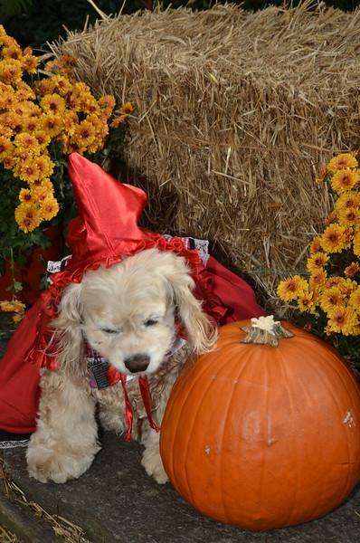 Halloween13-4429