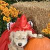 Halloween13-4432