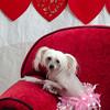 PR-Valentine2013-9934