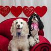 PR-Valentine2013-9920
