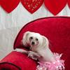 PR-Valentine2013-9935