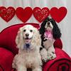 PR-Valentine2013-9921