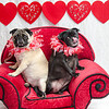 PR-Valentine2013-9749