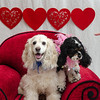 PR-Valentine2013-9916