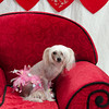PR-Valentine2013-9938