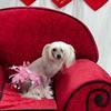 PR-Valentine2013-9937