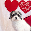PR-Valentine2013-9893