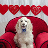 PR-Valentine2013-9896