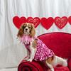 PR-Valentine2013-9818