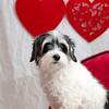 PR-Valentine2013-9891