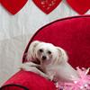 PR-Valentine2013-9932
