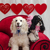 PR-Valentine2013-9918