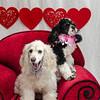 PR-Valentine2013-9913