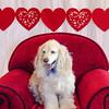 PR-Valentine2013-9898