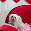 PR-Valentine2013-9936