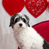 PR-Valentine2013-9892
