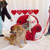 PR-Valentine2013-9881