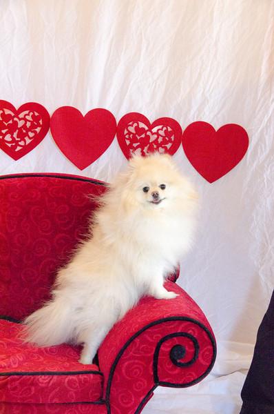 PR-Valentine2013-9762