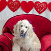 PR-Valentine2013-9894