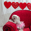 PR-Valentine2013-9929