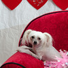 PR-Valentine2013-9931