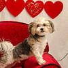 PR-Valentine2013-9699